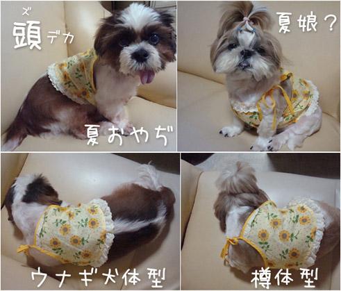Himawari_2008
